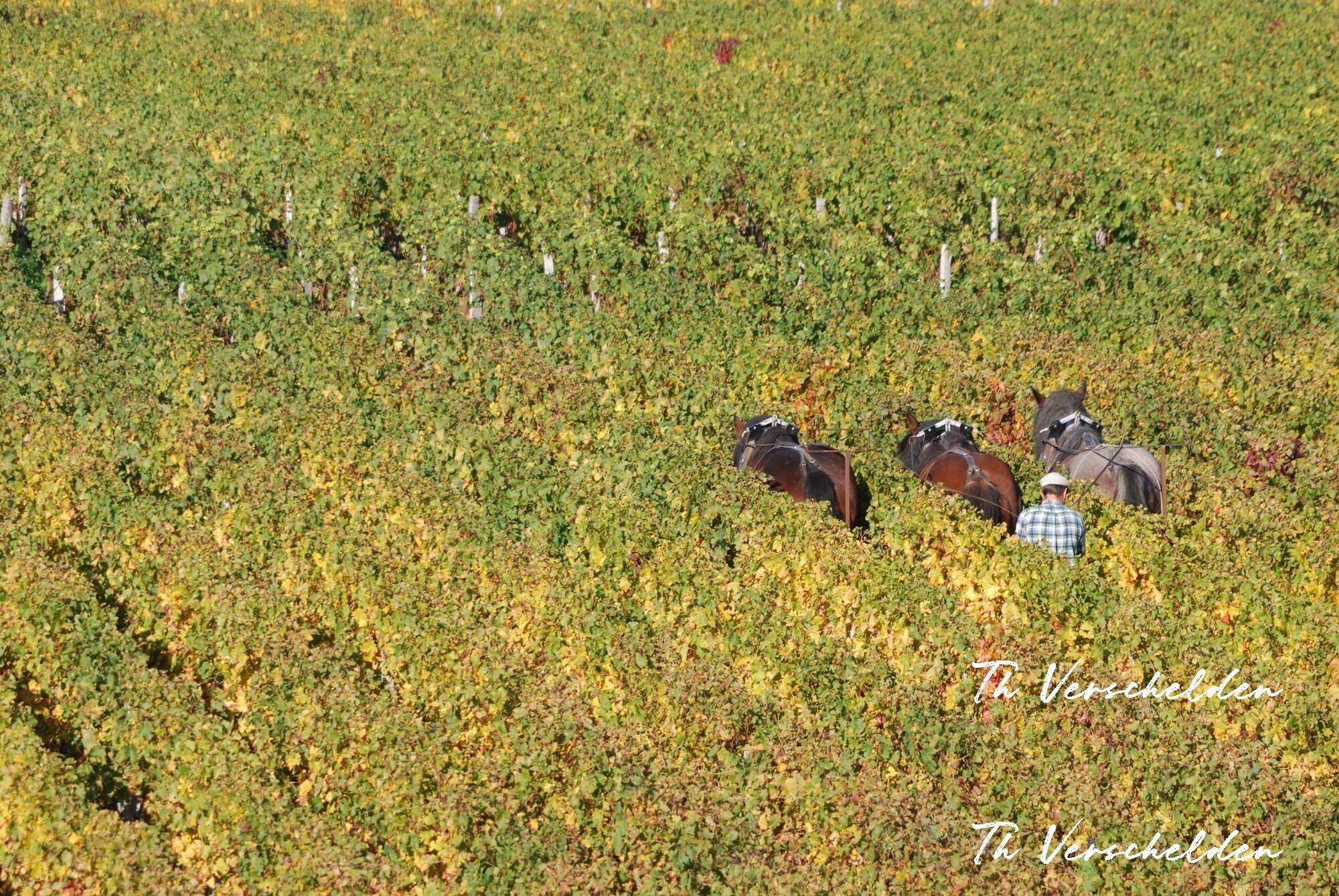 Cheval-et-vigne.fr